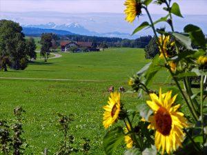 Landschaftsumgebung